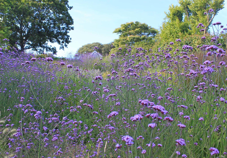 JPS_perennial_meadow_Dorset