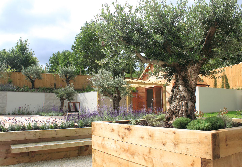 JPS_olive_trees_Dorset