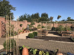 PLANTS TO PICK FOR AUTUMN